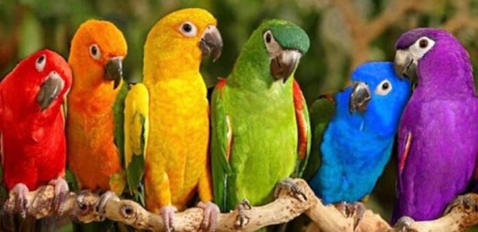 Nel regno dei pappagalli